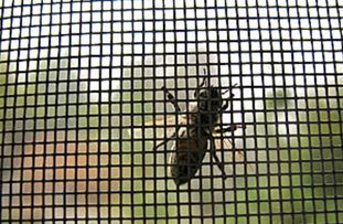 insect screen gilbert